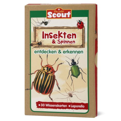 Scout Lernkarten-Box - Insekten & Spinnen
